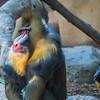 Zoo-68