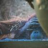 Zoo-145