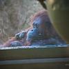 Zoo-143