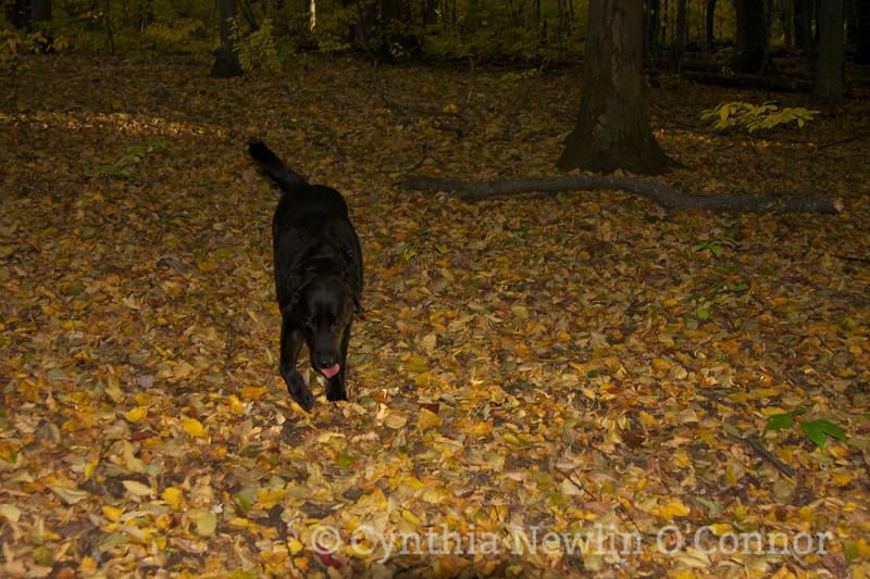 october 16 sherman 025 Rosie.jpg