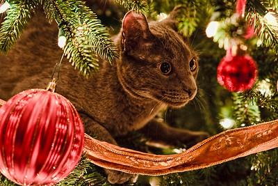 Benny loves to climb the Christmas tree!!!