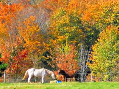 Fall NY 421 (33026451)