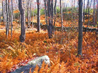 Fall NY 435 (33026452)