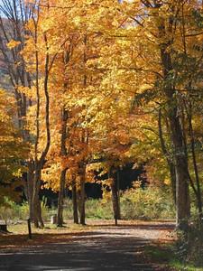 Fall NY 957 (32978982)