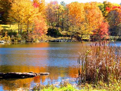 Fall NY 603 (33026461)