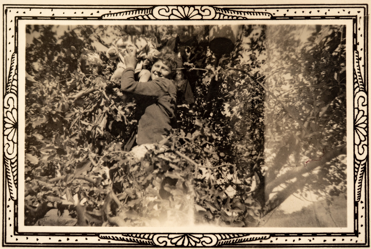 Jerome Piersol with Kate and Mae in an apple tree, Council ID?