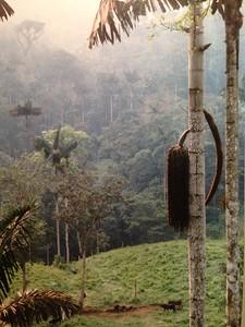 1996 Nov  Amazon Rainforest