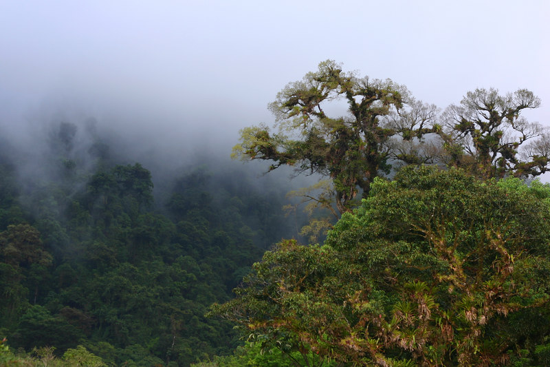 We were on the edge of the cloud forest, and the mist was clinging to the hillsides.