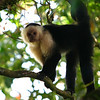 . . . a white faced monkey was waiting for us . . .