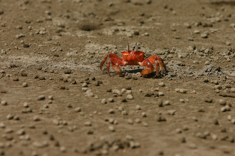 The sand crabs kept us company.