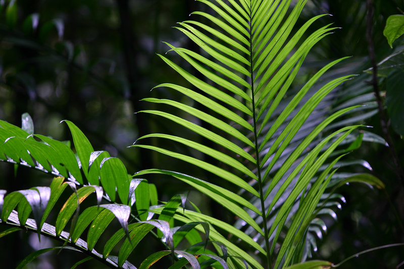 Even though we were there in the dry season, the rain forest was green and lush.