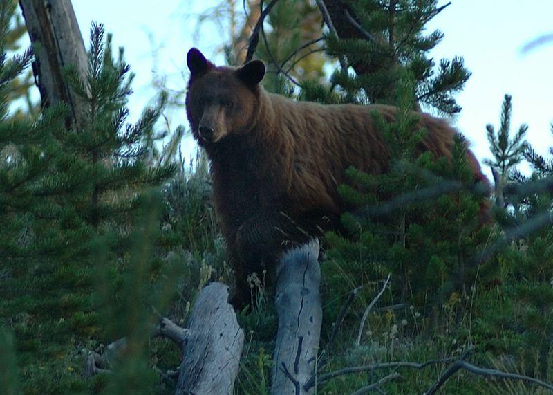 Annoyed Mamma Bear!!