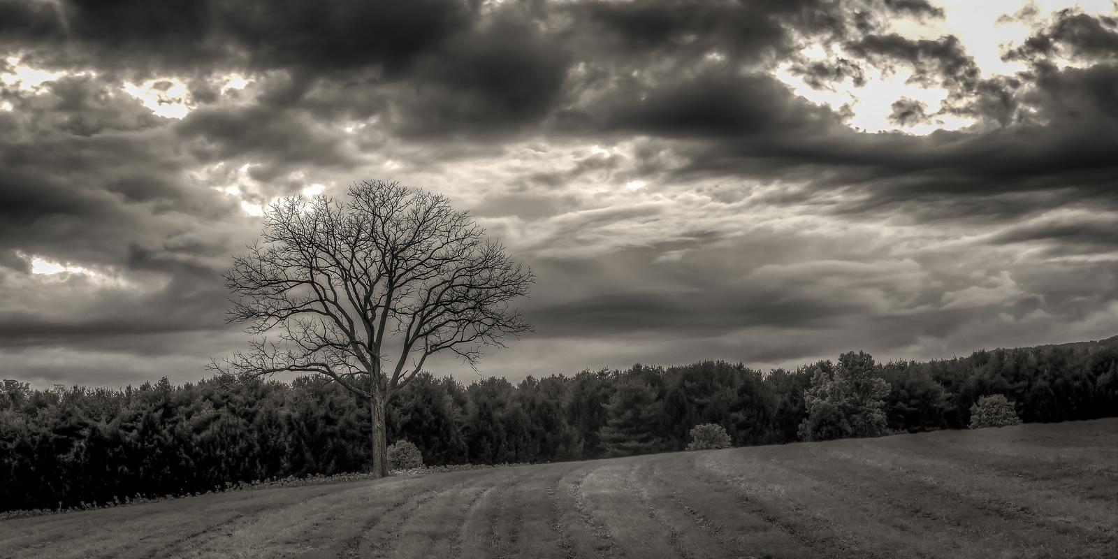 treeHDR-X3.jpg