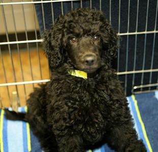 Gabriel at 12 weeks
