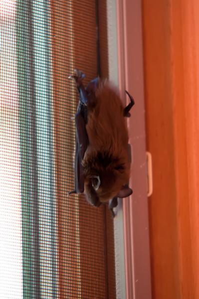 8.6.12 swimming & a bat