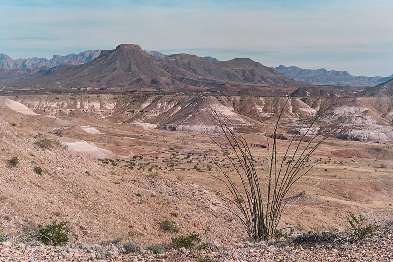ocotillo and chisos