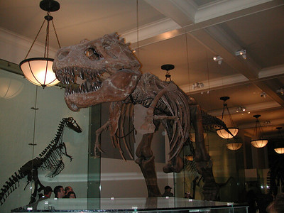 A rare photo of Paul's second grade teacher Mrs. Hinderstein, in her retirement home at the American Museum of Natural History in New York City.