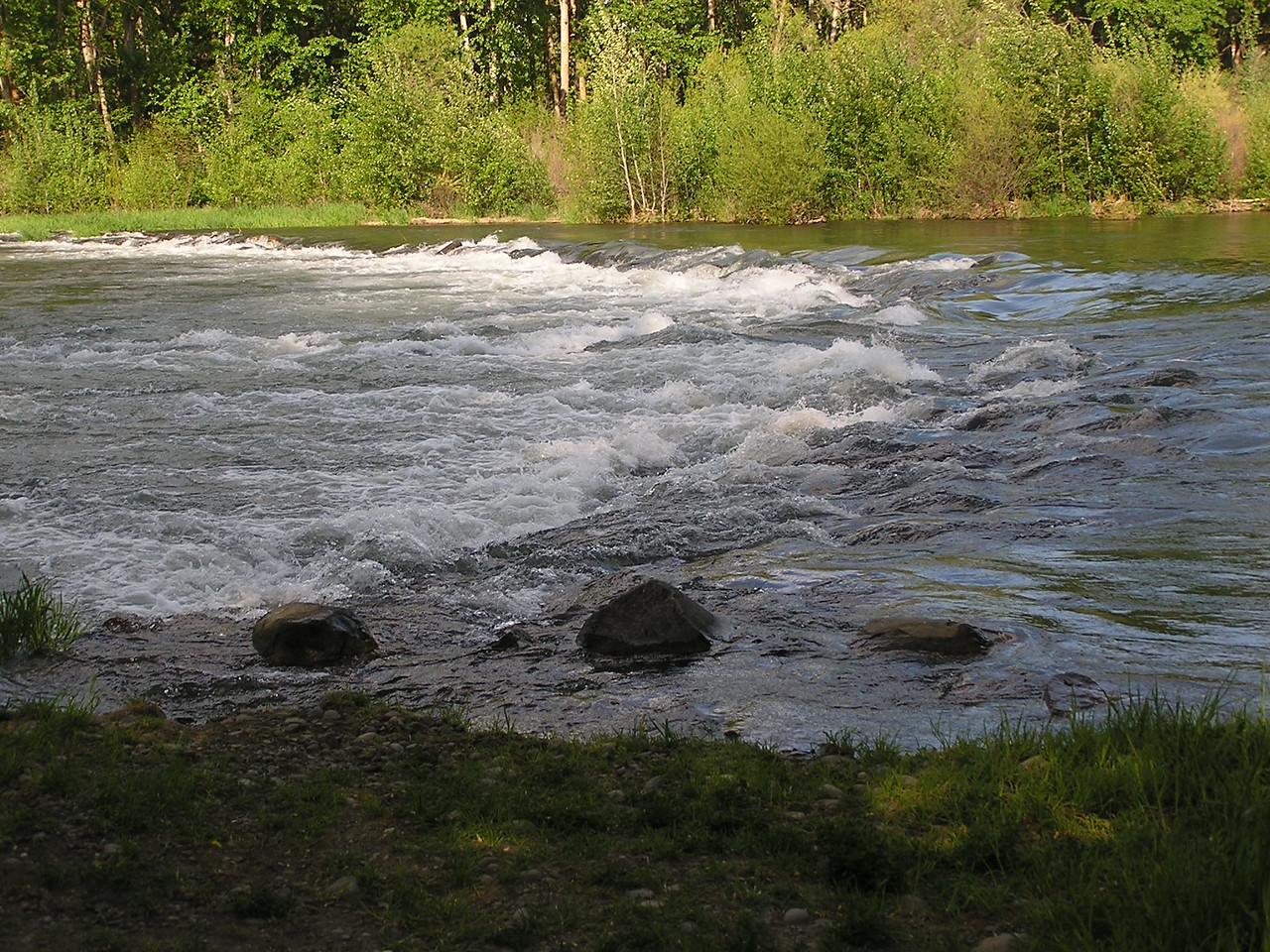 Looking across the Yakima River from Riverfront Park.  Rapids are big due to spring rain.