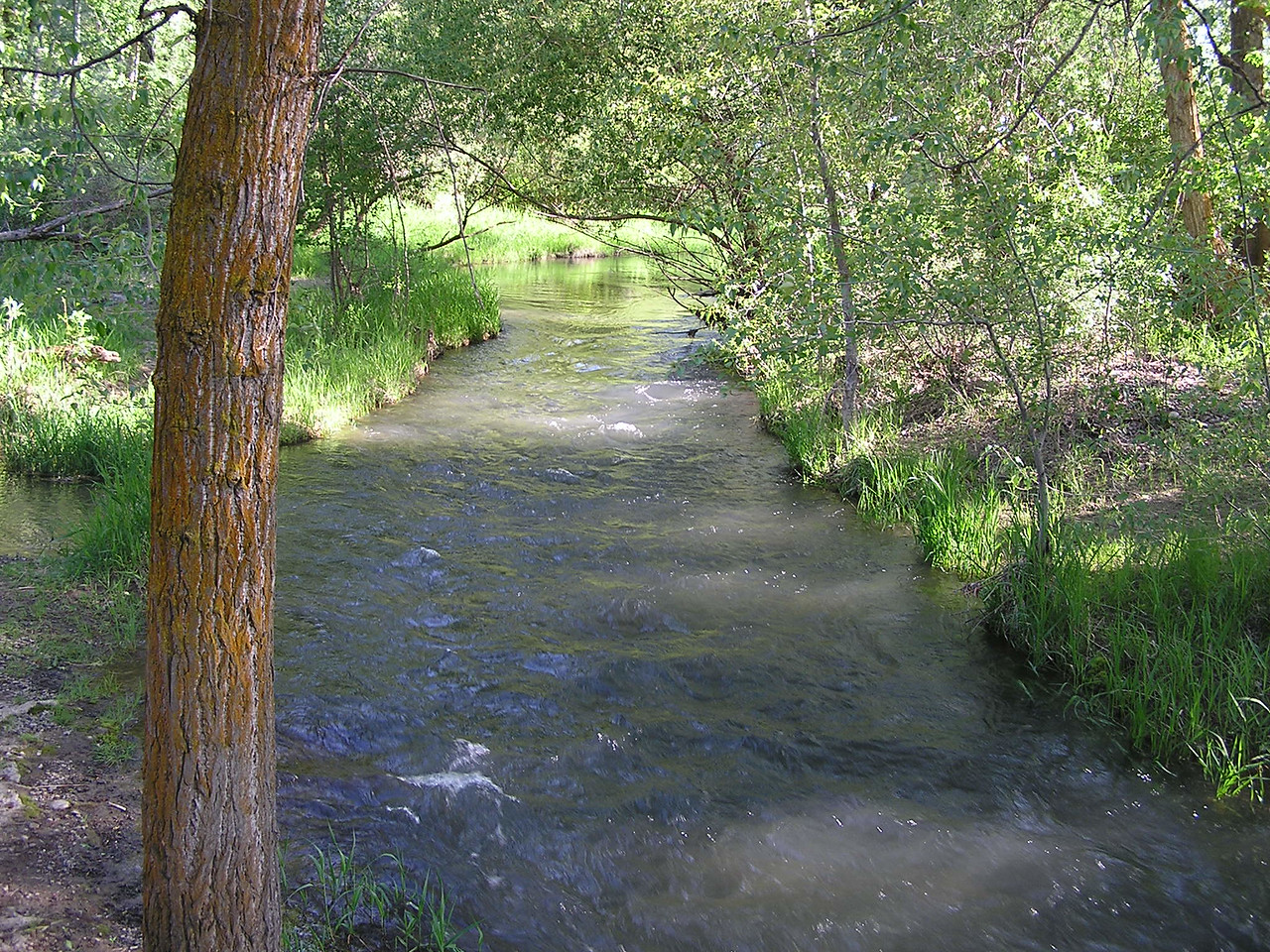A side stream from a walking bridge in the park.