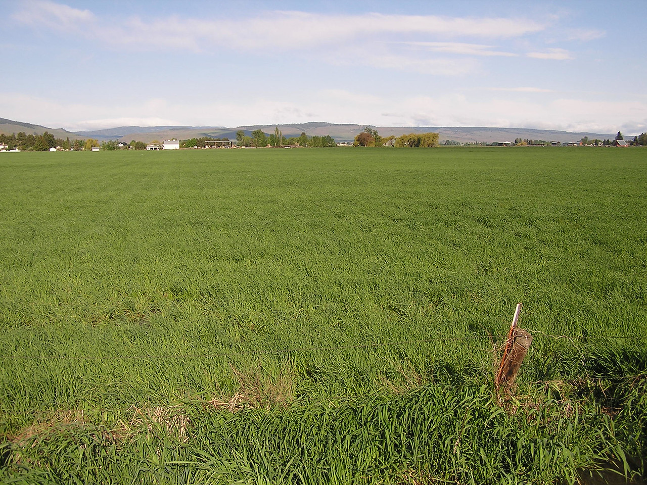 Hay field? Along the road ...