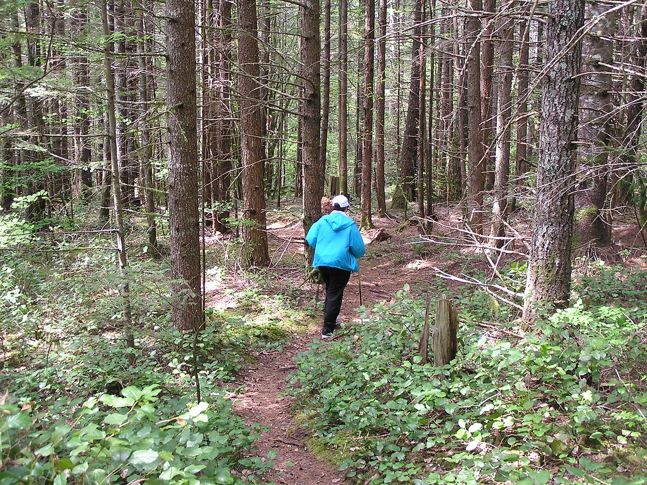 """We followed a side trail from the main trail down the mountain.  The side trail was named """"Blow Out""""."""