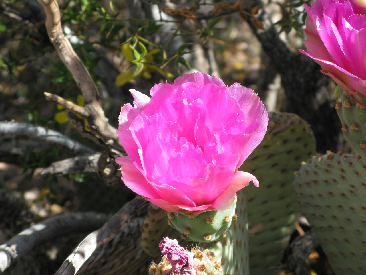 A cactus blossom along the trail.
