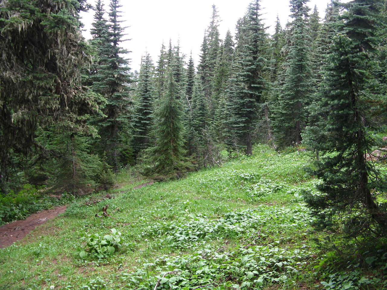 The trail climbs 1900 feet in about 2 miles.   After trudging up the steep trail, we welcomed the sight of a meadow in the subalpine forest.