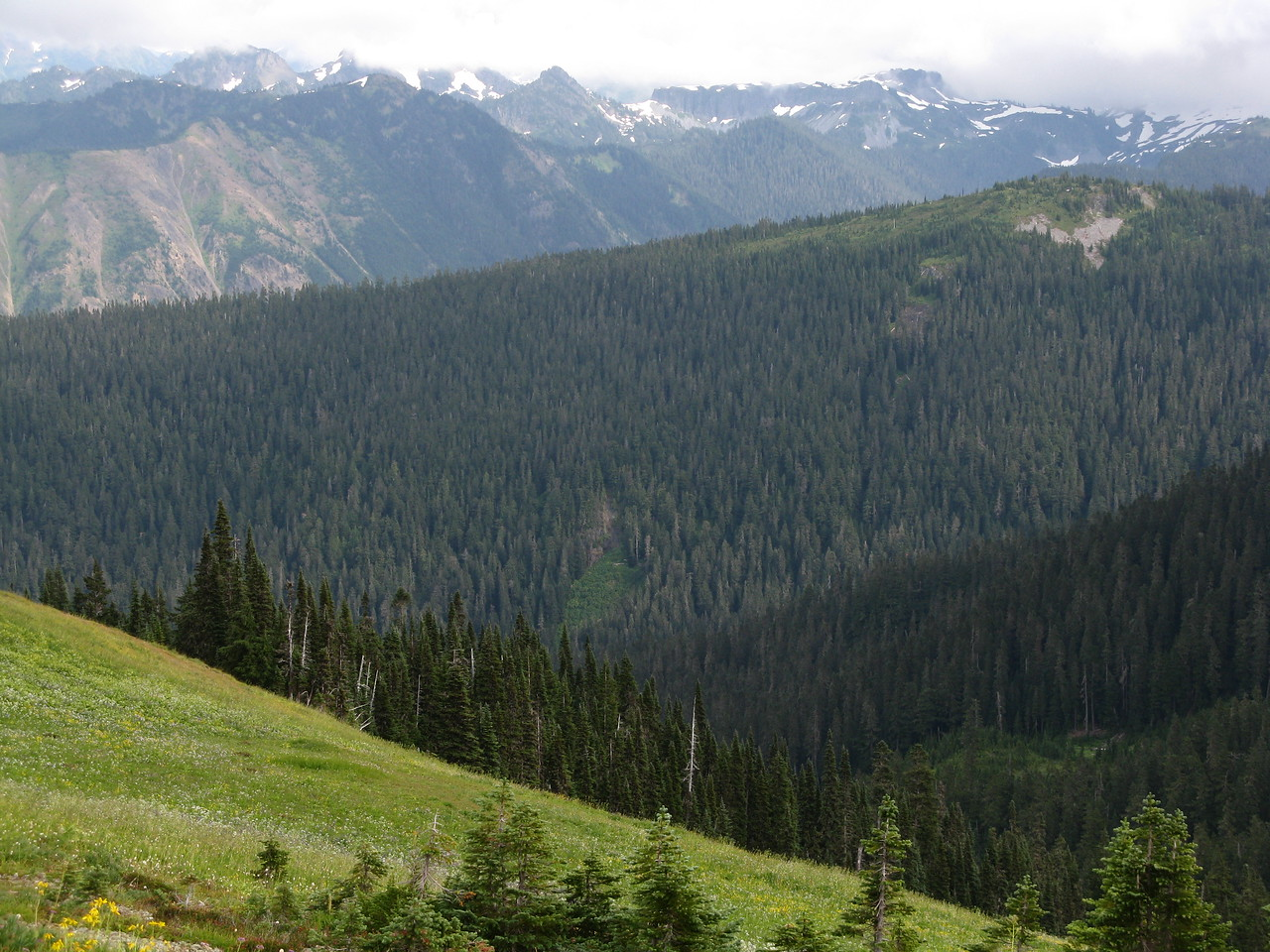 The mountain in the middle distance is coverd with evergreen forest.