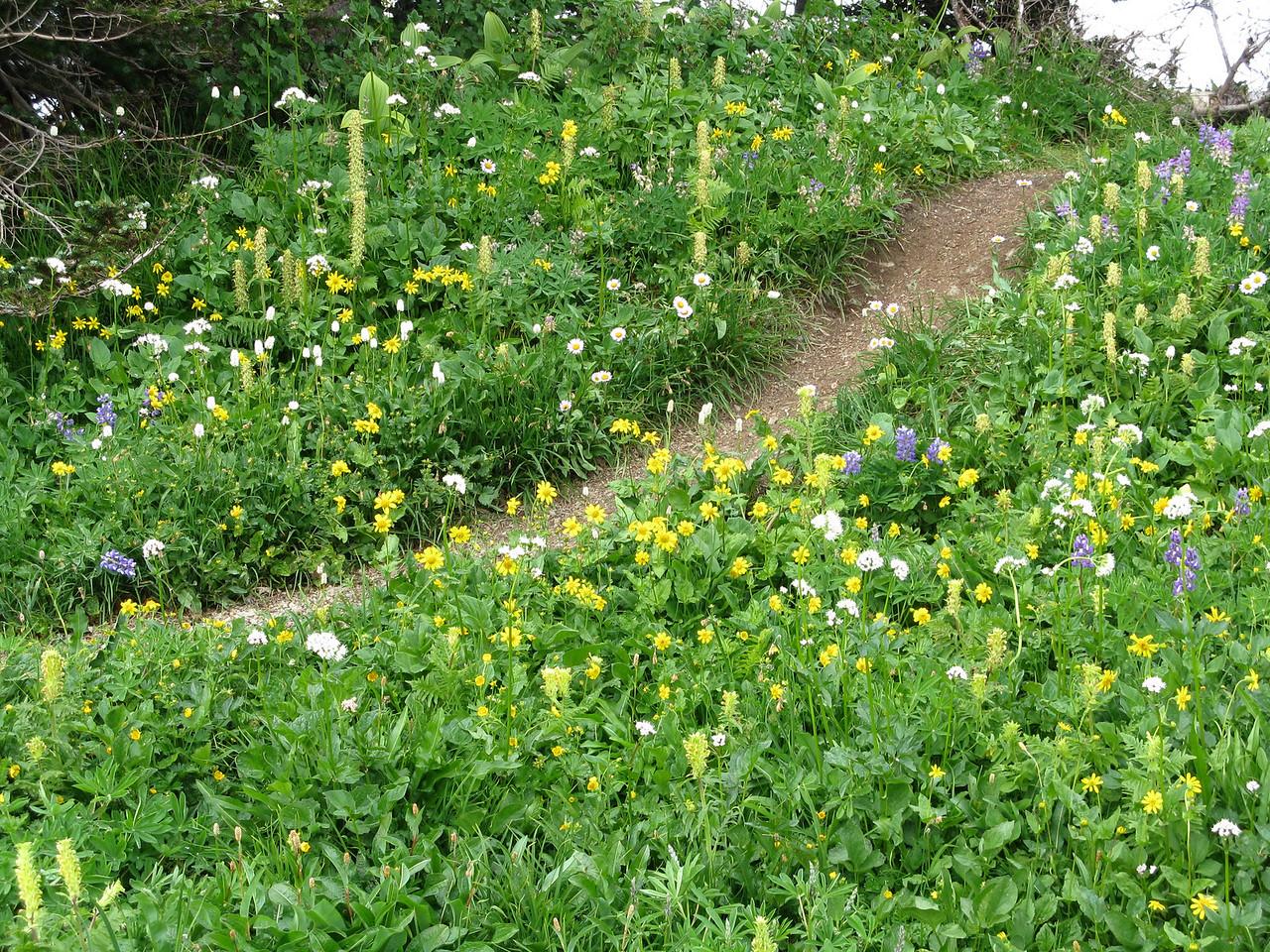 Purple, yellow and white wildflowers.