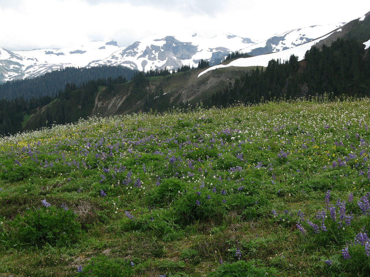 Snow covered mountains and wildflowers in the foreground.