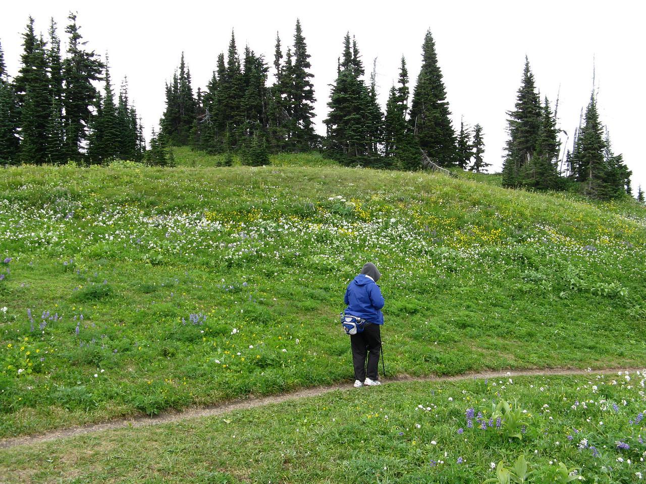 The trail on Skyline Ridge.