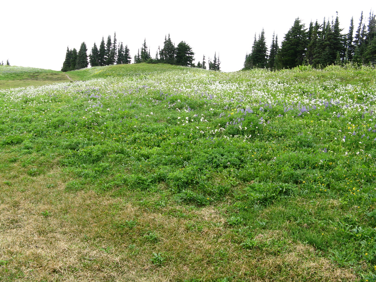 Wildflowers and evergreens.