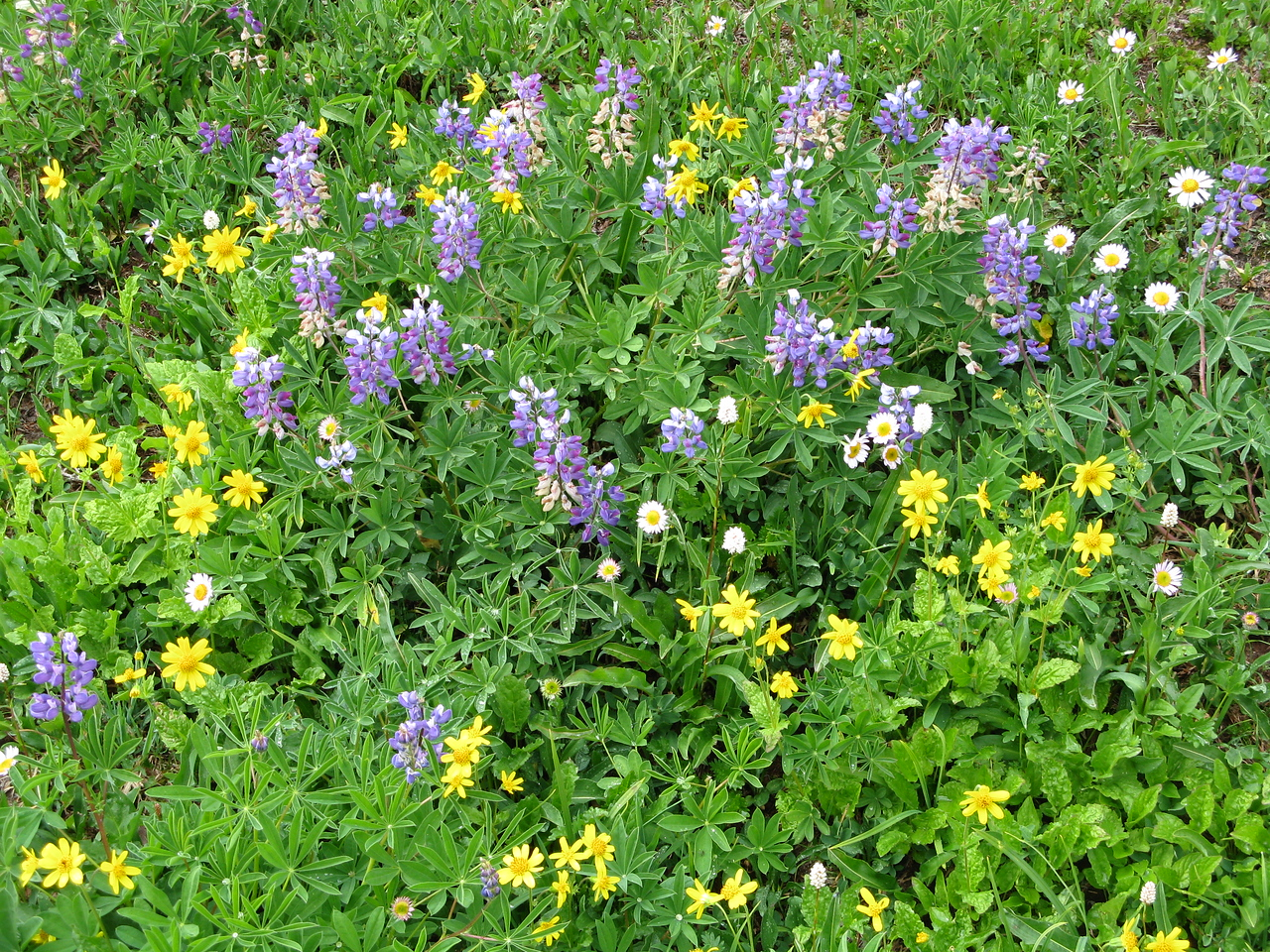 Wildflowers in the meadow.  A beautiful natural bouquet.