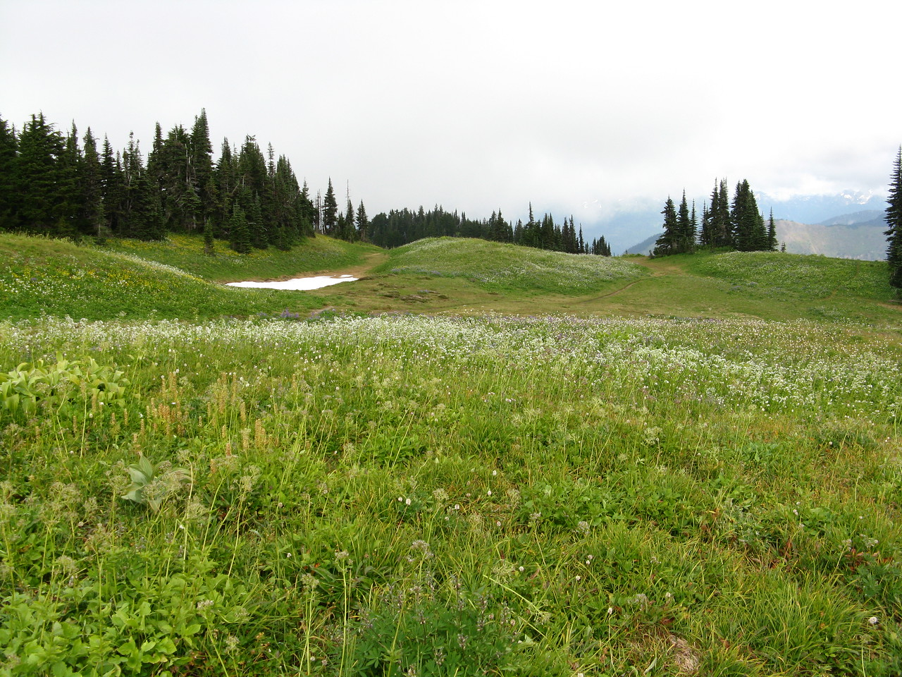 Another view of the meadow.
