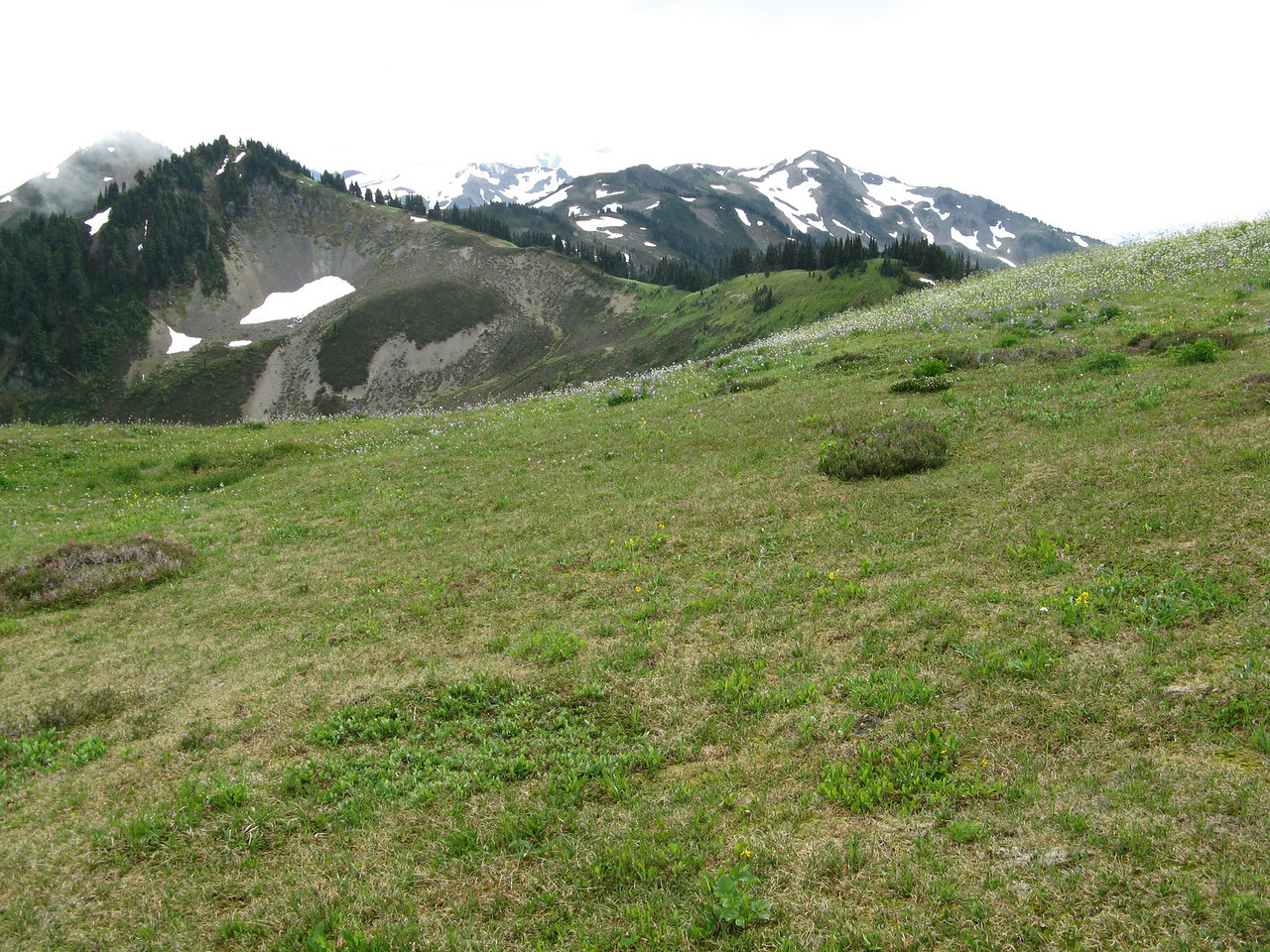 The meadow at the ridge top was enchanting.