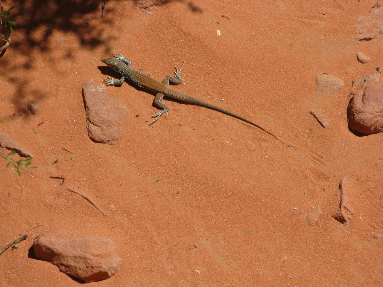 2011-04-22 Valley of Fire 017