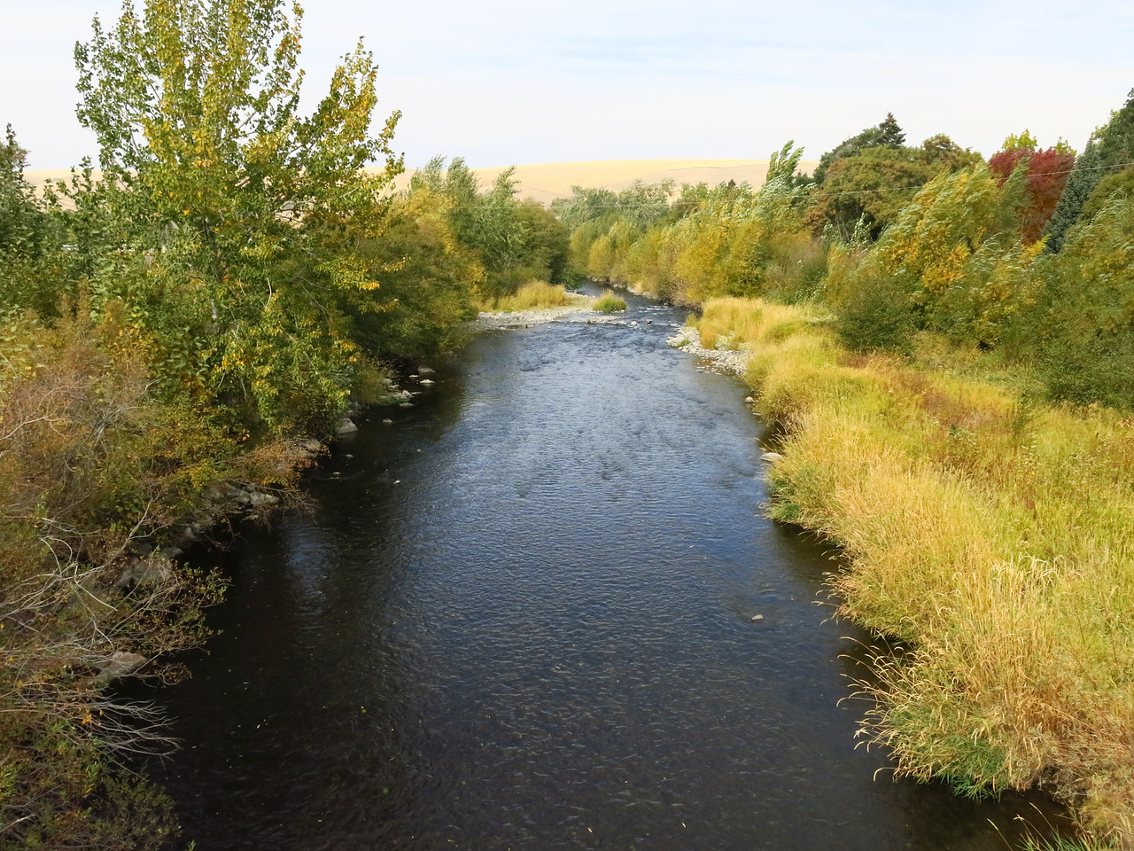 After the volkswalk, we walked along the Touchet River.   This is a downstream view from a foot bridge.
