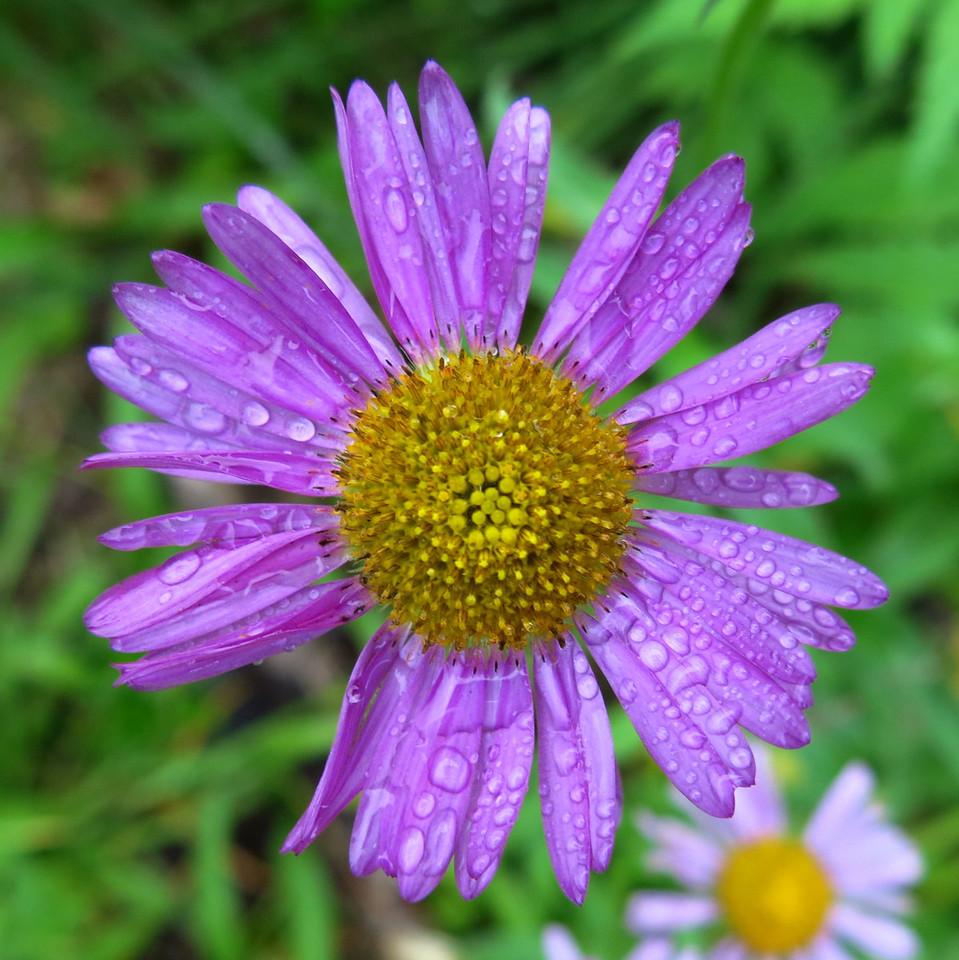 Lavender petals.