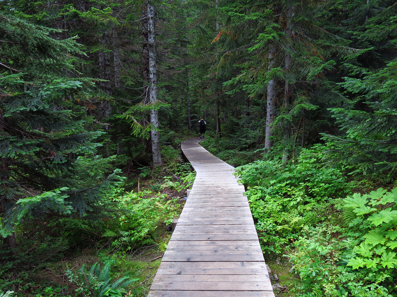 """We circumnavigated the lake in a counter-clockwise direction.   Martin remembered his venerable high school math teacher, who asserted, """"The only thing that runs clockwise is the clock.""""  This boardwalk provided an easy path."""