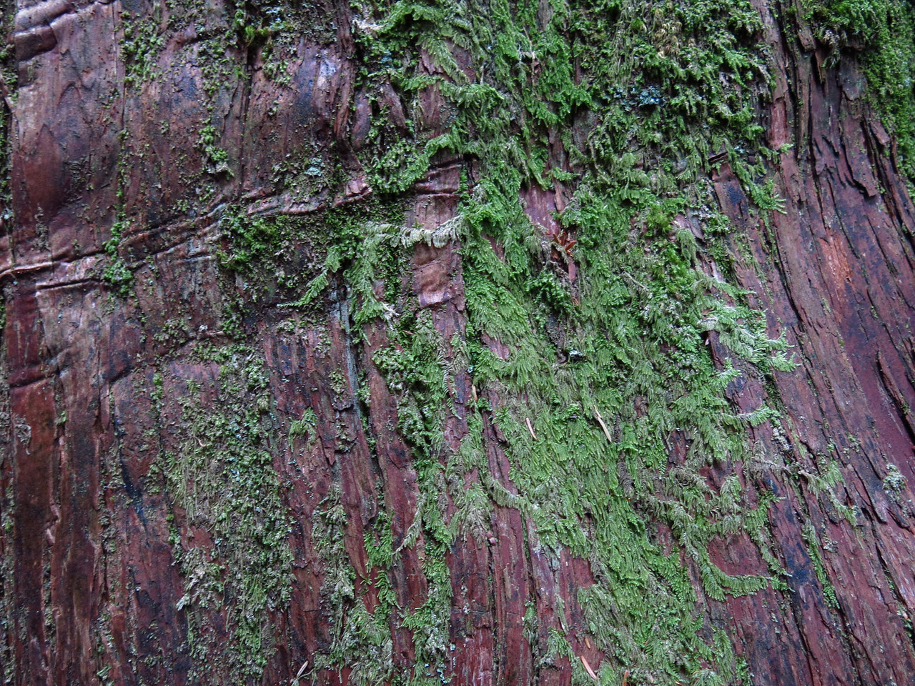 I wondered how the camera would render the texture of a moss covered tree trunk.  Not bad.