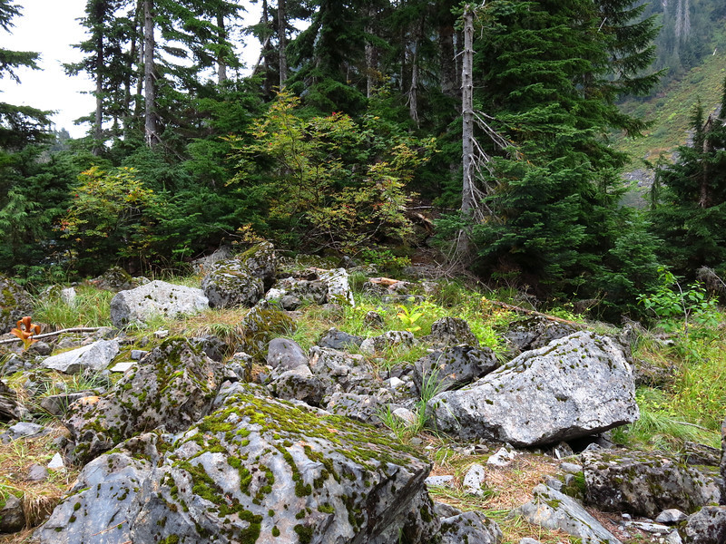Rocks, moss, deciduous bushes and evergreen trees.