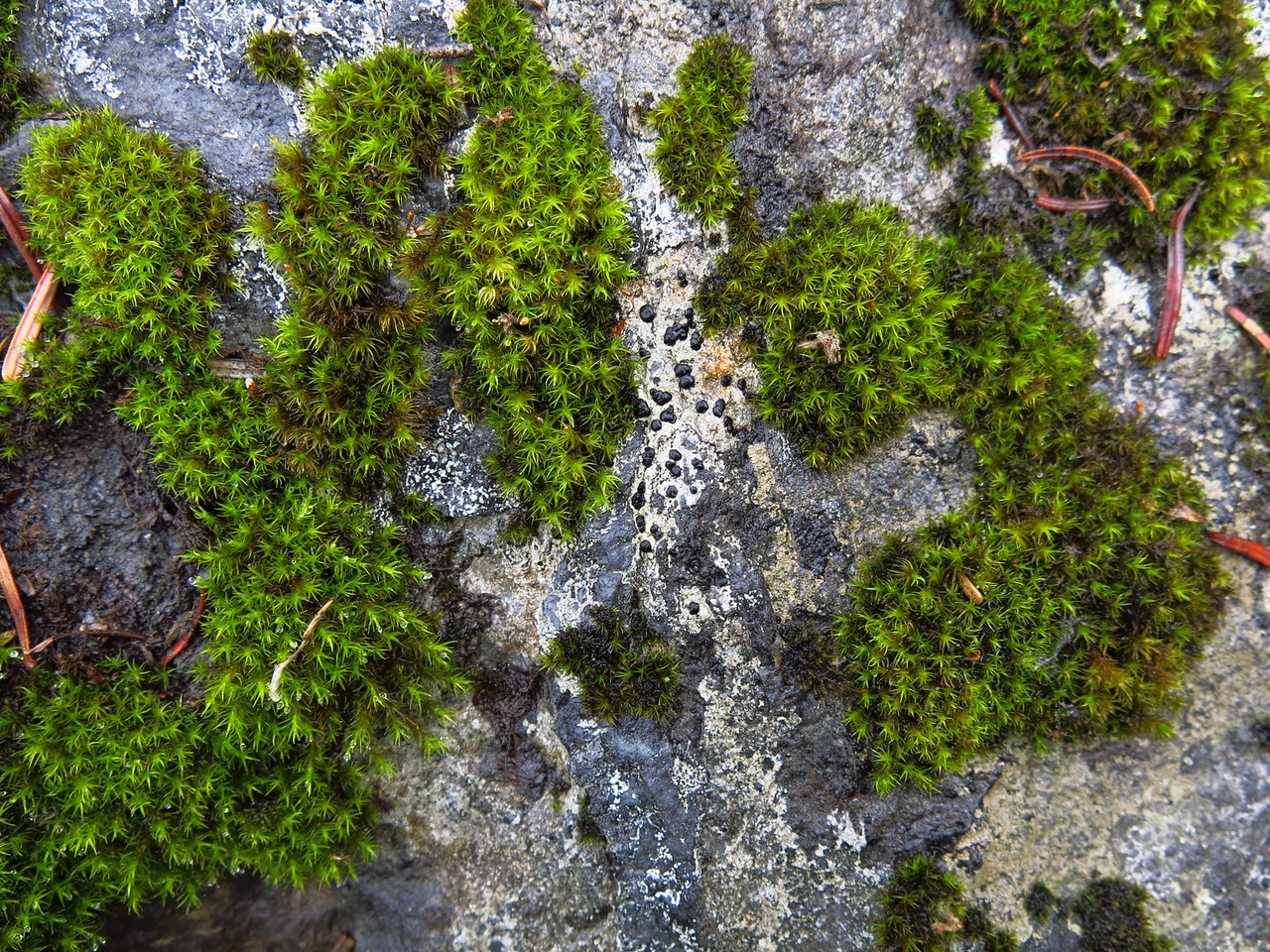 Interesting lichen somehow manage to cling to and survive on the rock surface.