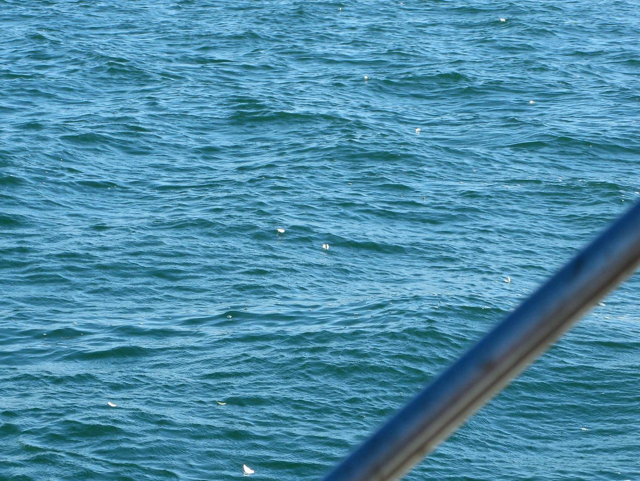 12-07-01 Sail 011