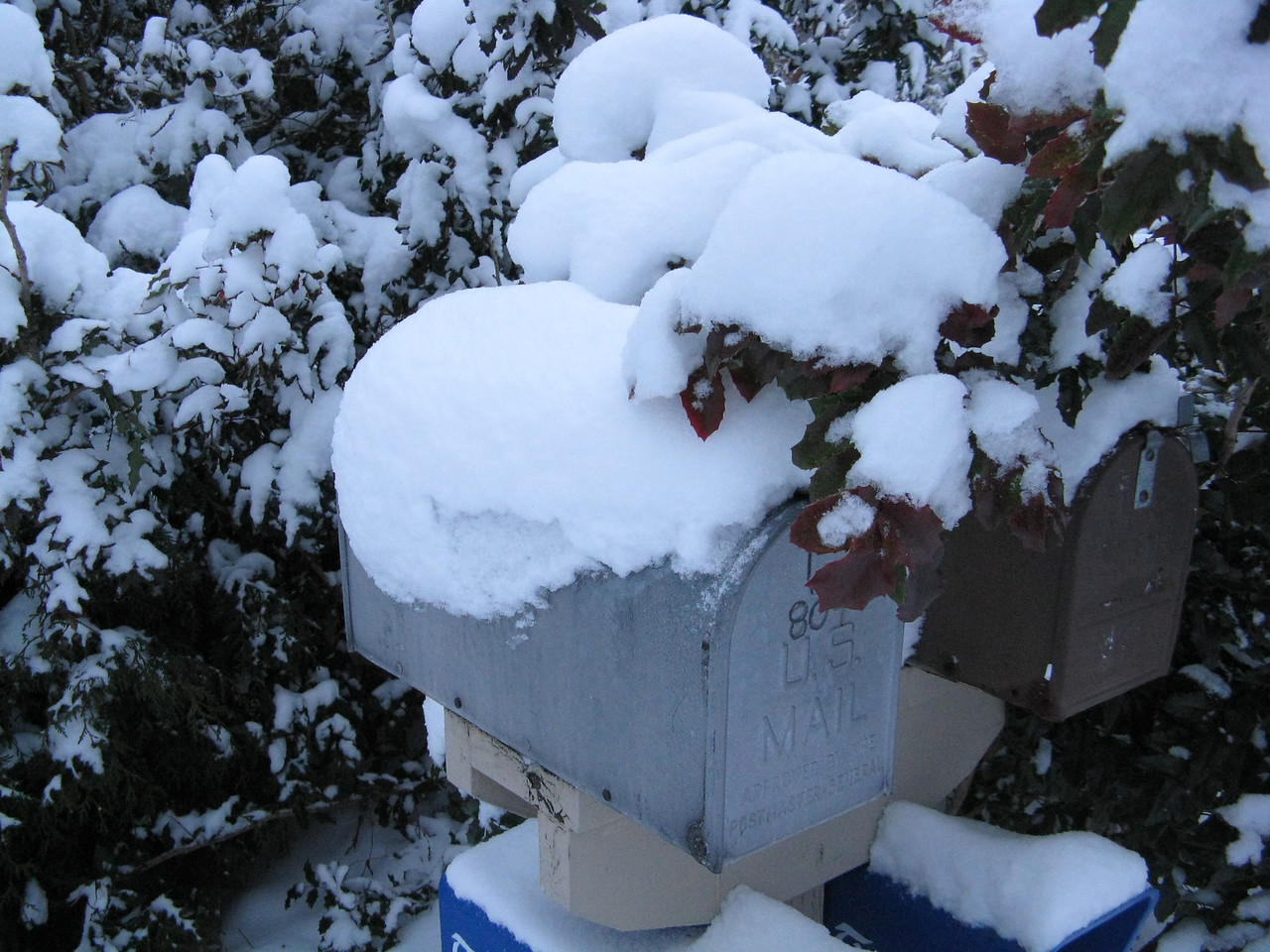 Our mail box covered in snow and branches of a holly bush.