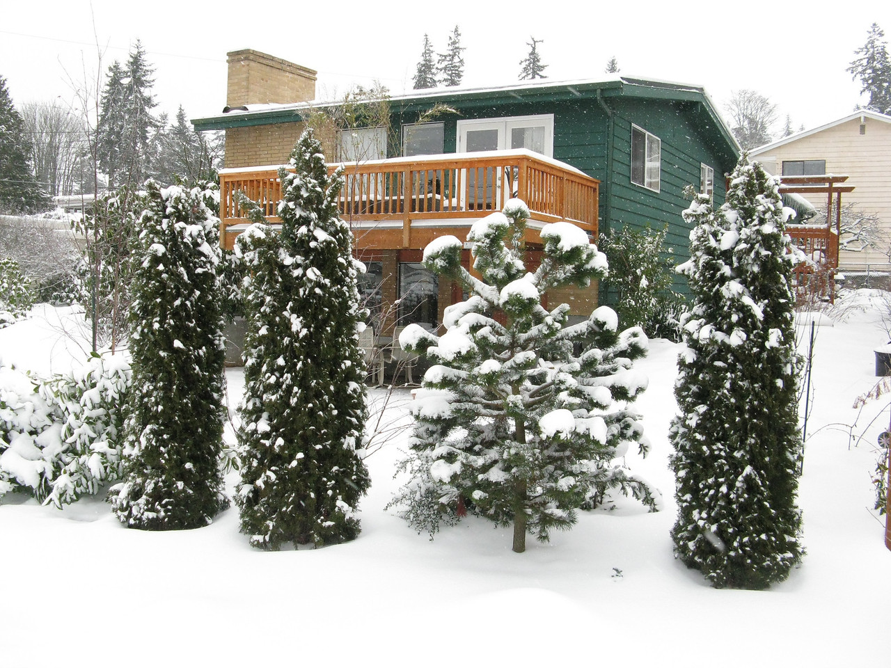 The west deck from the street with 3 pyrmadalis bushes and pine tree.