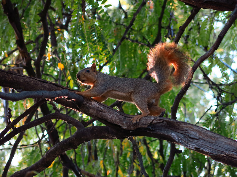 Another view of the squirrel.