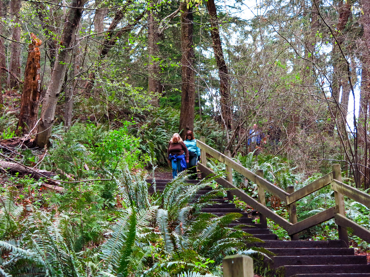 The dirt trail went up and down in Chism Beach Park.  This stairway led down to the beach.
