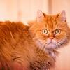 SRe2010_6626_Cat