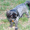 The_Puppies-DSD_2273_1024x685