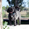 The_Puppies-DSD_2287_1024x685